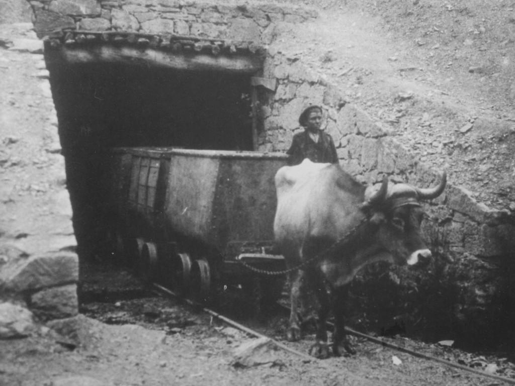 buey arrastrando una vagoneta de carbon
